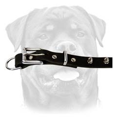 Classy leather dog collar for Rottweiler breed