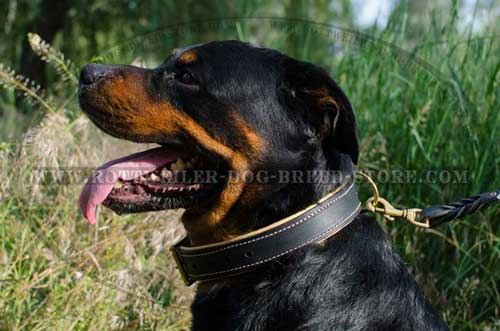 Handmade Rottweiler Collar for Walking/Working