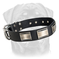 dog collars studded
