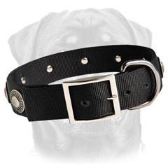 Customized dog collar for big dog breeds