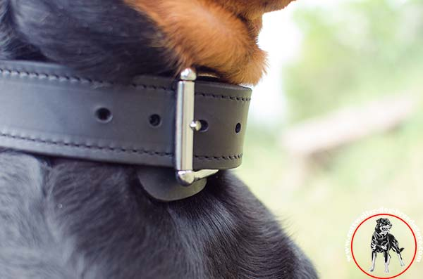 Rottweiler leather collar with elegant buckle