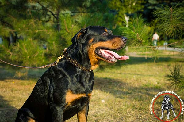 Rottweiler dogs attacking videos