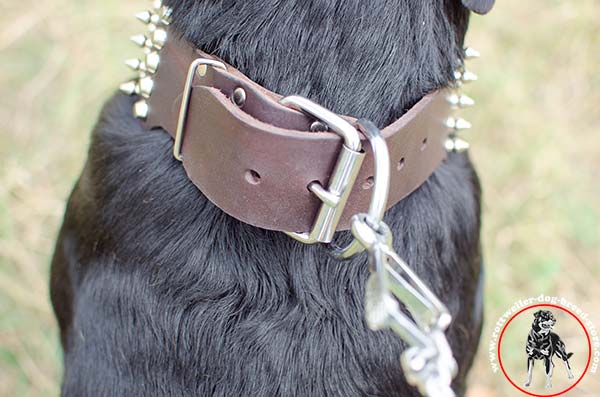 Rottweiler leather collar with quick release buckle