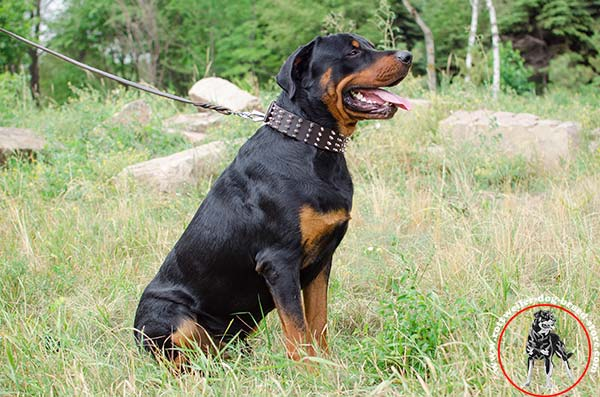 Extra flexible Rottweiler leather collar