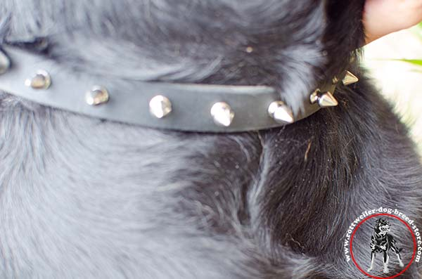 Rottweiler leather collar with magnificent decorations