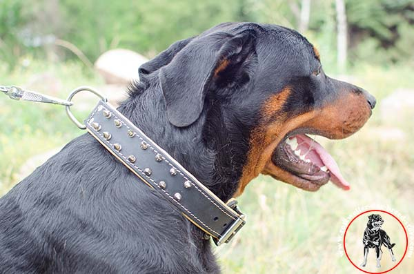 Rottweiler leather collar strongly stitched