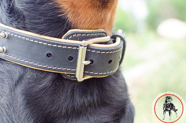 Buckled Rottweiler leather collar