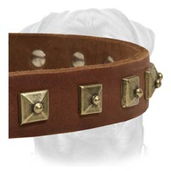 Exclusive leather buckle dog collar