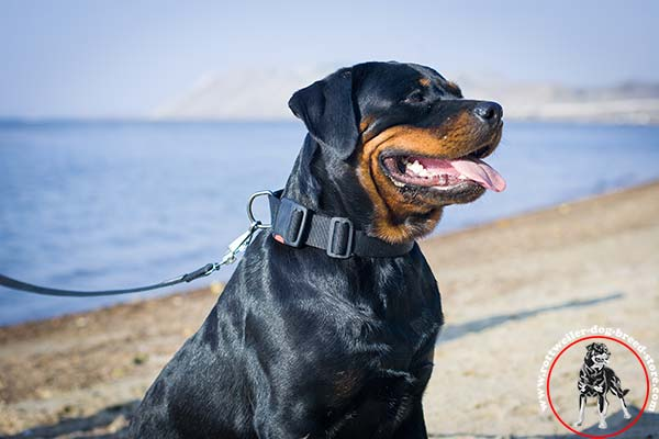 Rottweiler nylon collar with quick release buckle