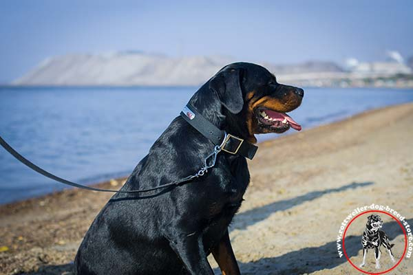 Water-resistant Rottweiler nylon collar