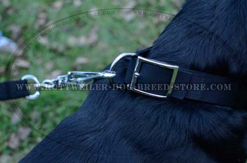Custom Rottweiler Dog Collar