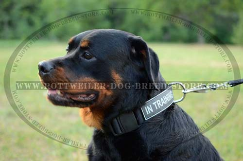 Walking Rottweiler Nylon Collar