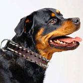 Rottweiler Leather Spiked Dog Collar
