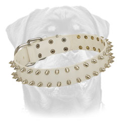White leather collar for Rottweiler