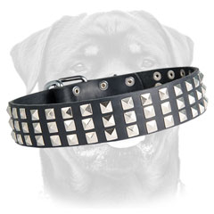 Leather black Rottweiler collar with rows of pyramids