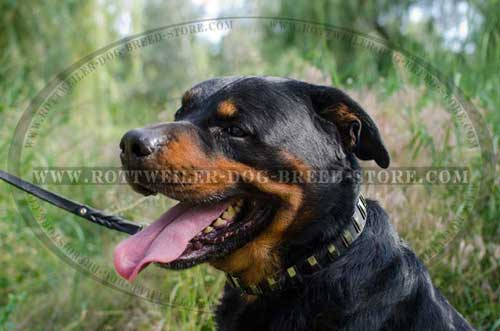 Rottweiler Collar Fully Leather with Decoration