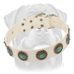 Elegant white leather dog collar for walking in style