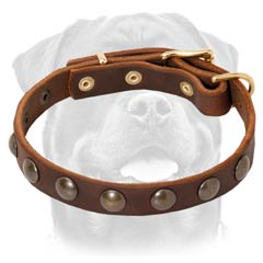Fashion leather Rottweiler collar studded