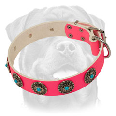 Fashionable pink leather Rottweiler collar for walking in beauty