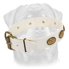 Leather Rottweiler collar white easy-to-connect-and-release buckle