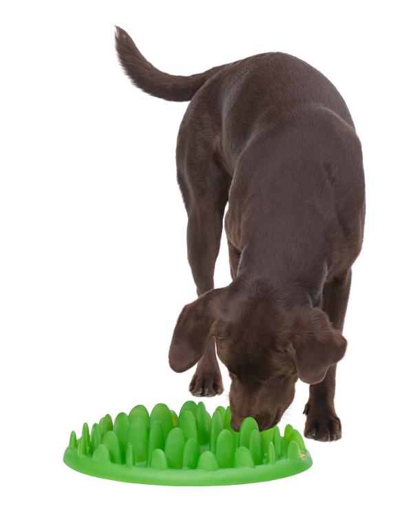 Dependable Dog Feeder Green Safe for Rottweiler's Health