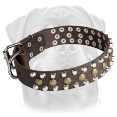 Leather decorated collar for Rottweiler
