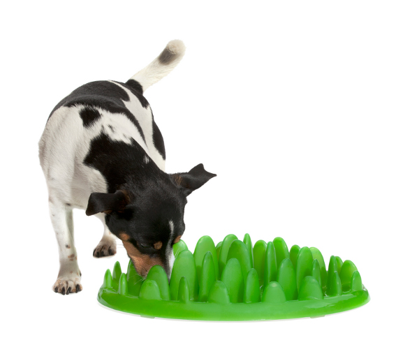 Rottweiler Interactive Feeder Turns Regular Nutrition into a Game