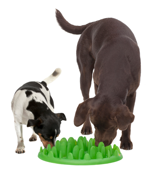 Grass Like Rottweiler Feeder Ideal for 2 Dogs Mealing