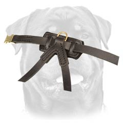 Obedience training harness for puppy