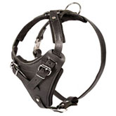 Rottweiler Agitation/ Protection Leather Dog Harness