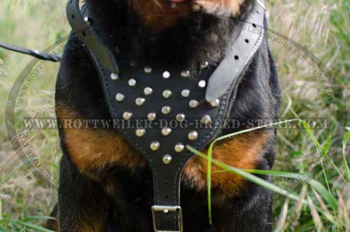 Leather Dog Harness with Broad Chest Plate for Better Comfort