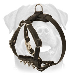 Rottweiler Leather Walking 