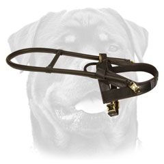 Rottweiler Leather Walking Harness