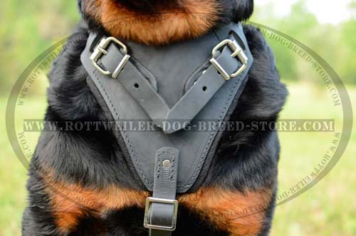 Finest Leather Dog Harness