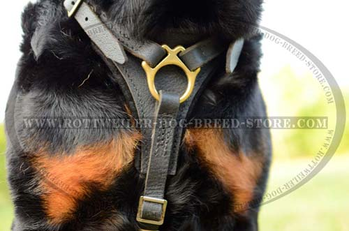 Non-Restrictive Rottweiler Leather Harness