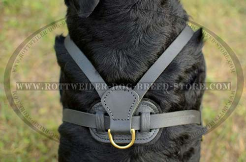 Best Fit Rottweiler Leather Harness