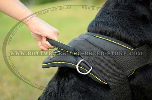 Everyday Nylon Rottweiler Harness