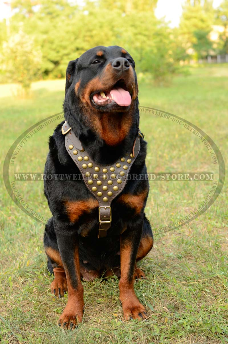 how to train your rottweiler to protect
