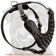 Reliable unique leather spiked dog harness
