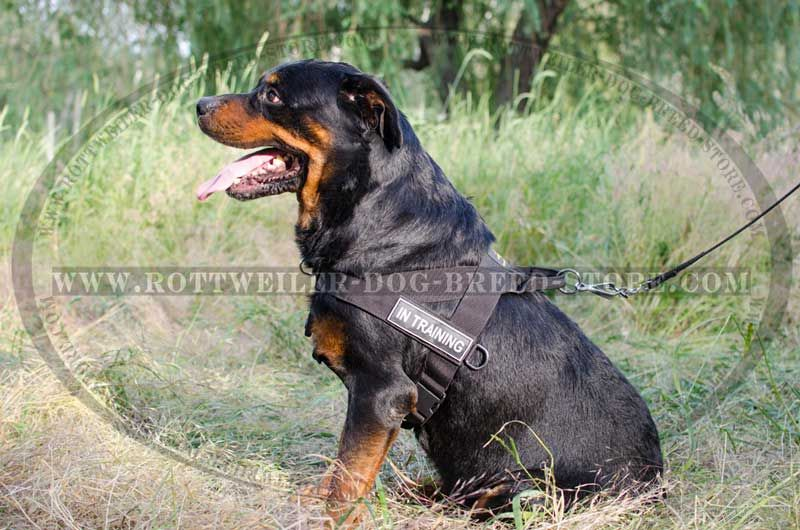 Sar Weatherproof Nylon Dog Harness Id Patches Rottweiler