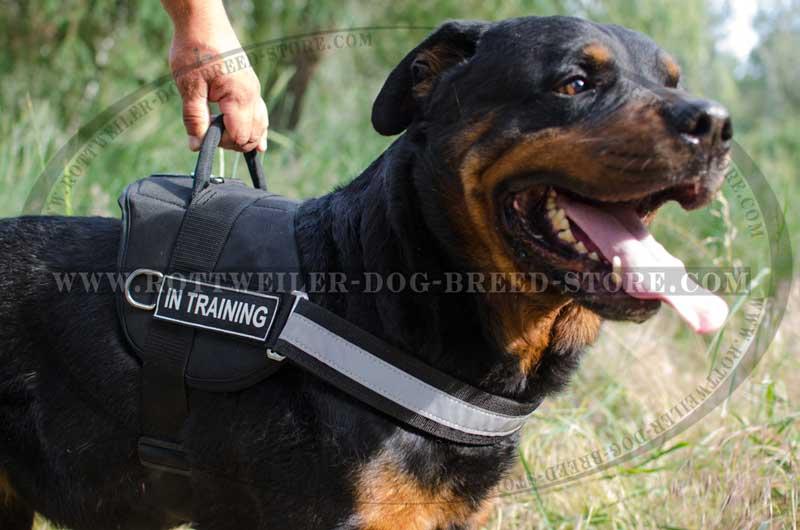 Rottweiler breed nylon dog harness SAR REFLECT H6P big reflective nylon worthy dog harness rottweiler best quality safe