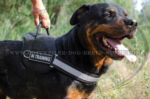 Lightweight Nylon Rottweiler Harness for Working Dogs