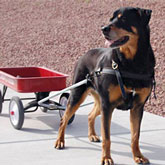 Dog Cart Rottweiler Harness