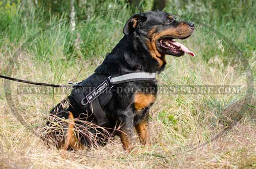 Practical Nylon Canine Harness for Rottweilers' Work/Walk
