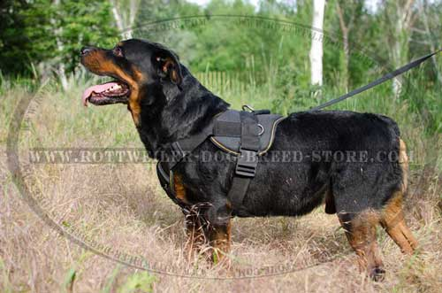 dog weight pulling dog harness