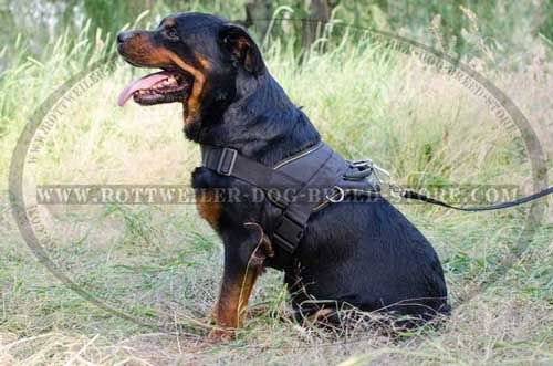 Hand crafted Nylon Canine Harness for Rottweilers