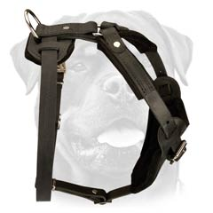 Leather Harness for Rottweiler