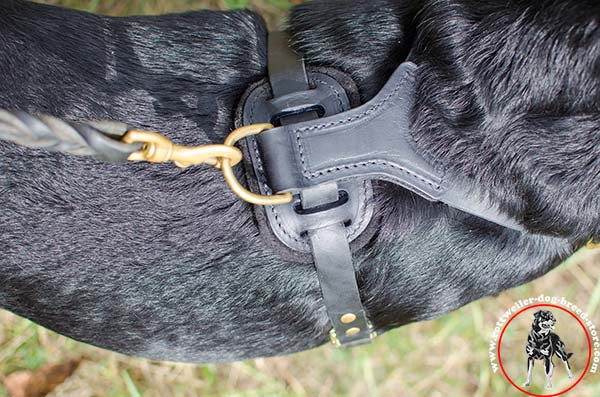 Rottweiler harness with no-rubbing back plate