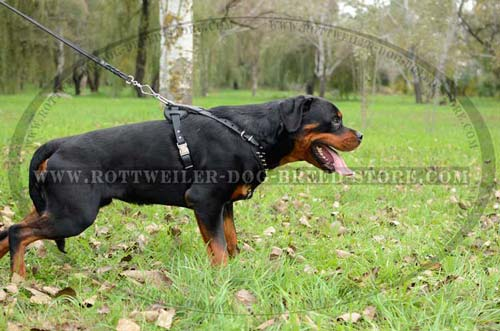 High-Grade Leather Dog Harness