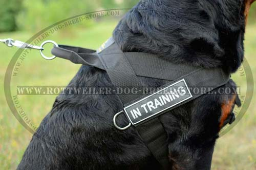 Lightweight Nylon Rottweiler Dog Harness